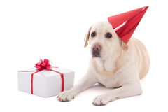 Dog (golden retriever) in birthday hat with gift isolated on whi Stock Photo