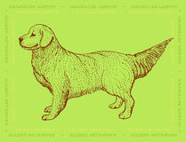 Dog Golden Retriever on a green ornamental background Royalty Free Stock Photo