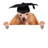 Dog graduate Royalty Free Stock Images