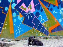 A dog and Graffiti wall. A black dog sitting in the front of a colorful graffiti wall on Moganshan road in Shanghai China stock photos