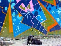 A dog and Graffiti wall Stock Photos