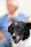 Dog & gran Stock Image