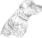 Dog breed Staffordshire Terrier painted in graphic style. stock illustration