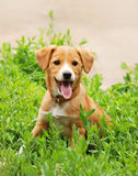 Dog in grass Stock Photography