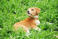 Dog in grass Stock Photos