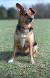 Dog on the grass. Scan from film Royalty Free Stock Photography