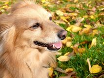 Dog on grass. In orchard stock photography