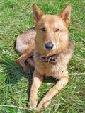 Dog on the grass Stock Photos