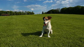 Dog on the grass stock video