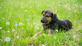 The dog on the grass Stock Photos