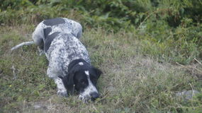 Dog in the grass Stock Photography
