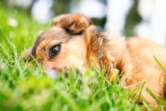 Dog in grass Stock Image