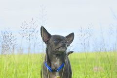 A dog on grass field. In afternoon Stock Photo
