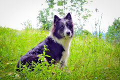 Dog on the grass Stock Image