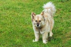 Dog on Grass Stock Photo