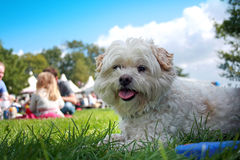 Dog on grass. Nice dog lying on the grass in a park on a sunny day stock images
