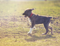 Dog on grass. Portrait of young sweet dog on grass Royalty Free Stock Image