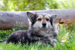 Dog on grass (series Animals) Royalty Free Stock Images