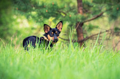 Dog on the grass. Standing and looking at something dog on the grass stock image