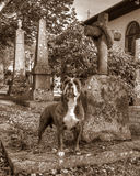 A dog with  the grave and guarding his masters grave in HDR and retro style. A faithful dog stand and guarding at his masters grave in HDR and vintage style. The Royalty Free Stock Photos