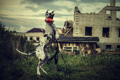 Dog Great Dane in a jump catches a toy Royalty Free Stock Photography