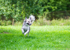 Dog in green field Stock Photo