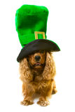 Dog in green hat Royalty Free Stock Images
