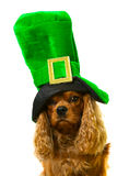 Dog in green hat Royalty Free Stock Image