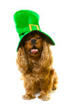 Dog in green hat Stock Photography
