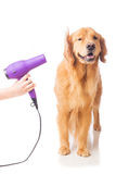 Dog groomer Royalty Free Stock Photography
