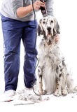 Dog grooming Stock Image