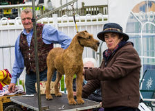 Dog grooming. A lady grooming her dog for the Cartmel Show 2012 stock photos