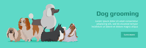 Dog Grooming Banner. Long Haired Dog Breeds Royalty Free Stock Photography