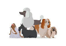 Dog Grooming Banner. Long Haired Dog Breeds Stock Photography