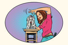 Dog grooming, Barber shears pet Royalty Free Stock Photography