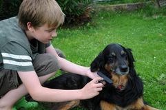 Dog grooming. Grooming, boy combing and detangling the fur of his dog Royalty Free Stock Photo