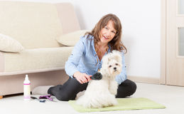 Dog grooming at home Royalty Free Stock Photo