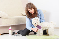Dog grooming at home Stock Images