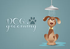 Dog grooming Royalty Free Stock Image