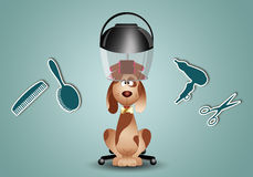 Dog grooming Royalty Free Stock Photography