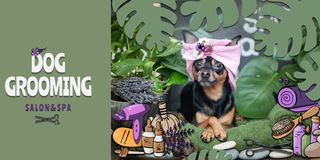 Dog Grooming Salon and spa Poster,  banner . Photo and illustration, cartoon style.  Dog in the spa care items and plants. Dog Grooming Salon and spa Poster royalty free illustration