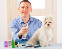 Dog grooming. Smiling man grooming a dog purebreed maltese Stock Photography