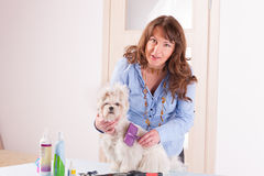 Dog grooming Stock Images