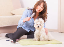 Dog grooming. Smiling woman grooming a dog purebreed maltese Stock Photos