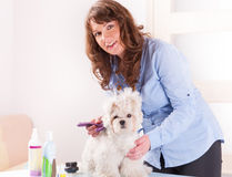 Dog grooming. Smiling woman grooming a dog purebreed maltese. Focus intentionally left on dog Stock Photo