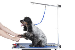 Dog grooming table. On a white background stock photography