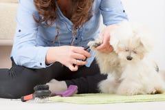Dog grooming stock photos
