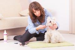 Dog grooming. Woman grooming a dog purebreed maltese Stock Photo