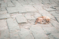 Dog on the ground Royalty Free Stock Photos
