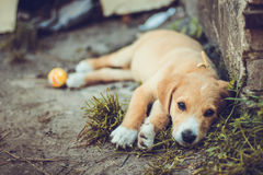 Dog on the ground Royalty Free Stock Photography